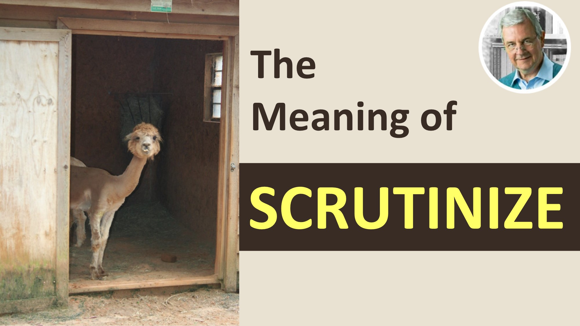 what does scrutinize mean